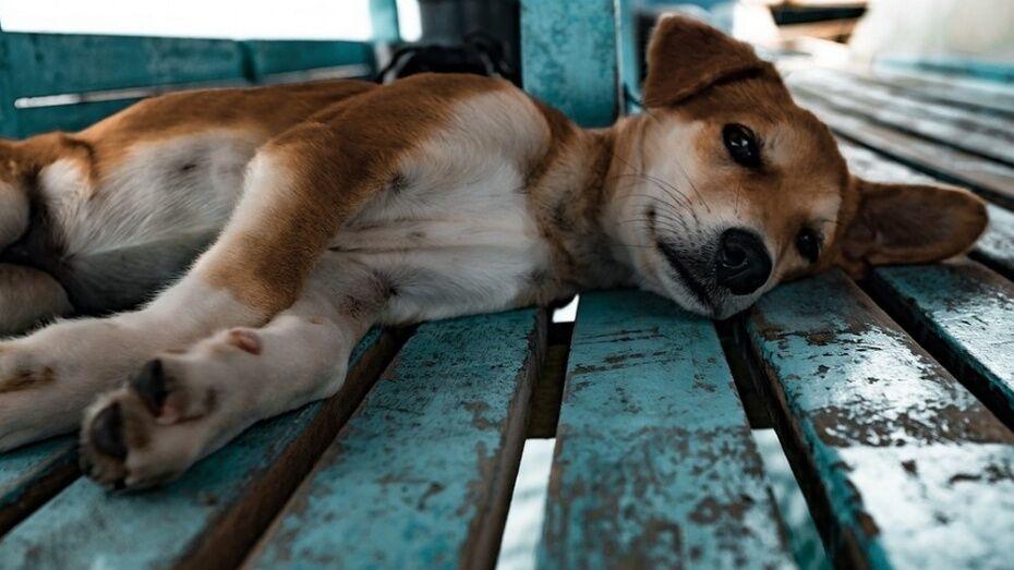 Воронежцы сообщили об отстреле 10 собак в микрорайоне Боровое