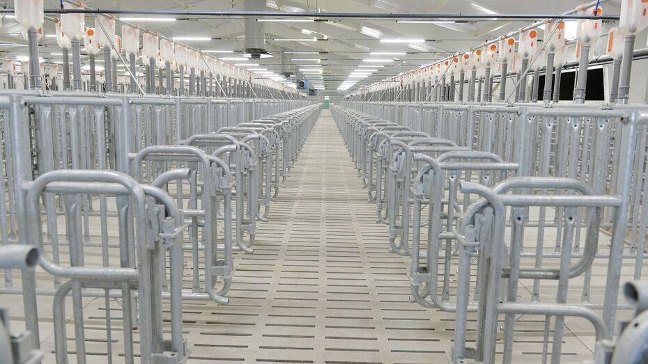 Свинокомплекс на 43 тыс голов заработает в Воронежской области в октябре 2016 года