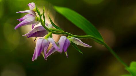 В «Дивногорье» нашли редкое для Воронежской области растение