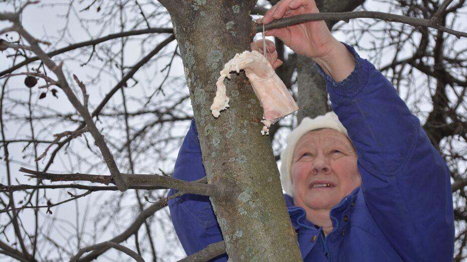 Жители Нижнедевицкого района помогут птицам пережить холода