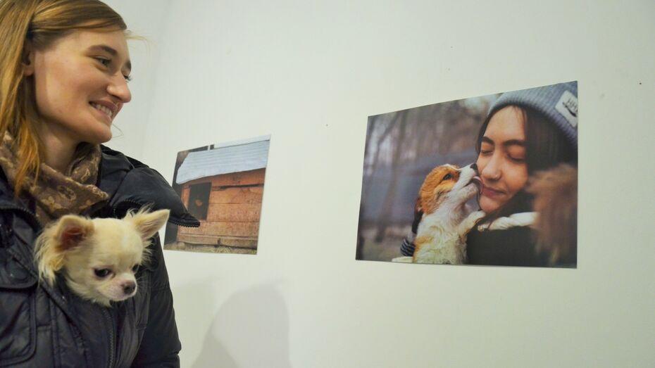 Волонтеры собрали 20 тыс рублей для бездомных собак Воронежа в галерее «Х.Л.А.М»