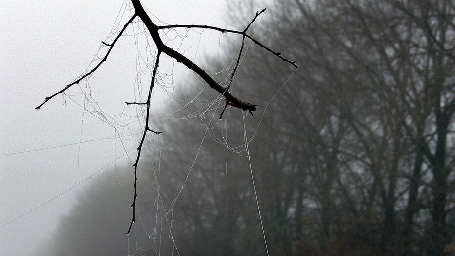 Погода в Воронеже останется прохладной и пасмурной