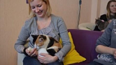 В Воронеже вновь откроется кафе с кошками