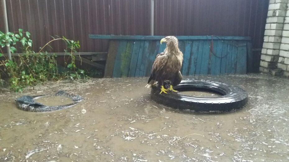 В Воронеже упавшая во время грозы ветка проломила вольер с дикими животными
