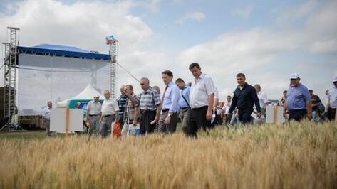 День воронежского поля в 2015 году собрал более 150 сельхозкомпаний