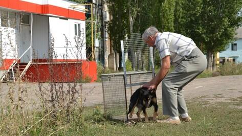 В Бутурлиновке ветеринары отловили 15 бродячих собак