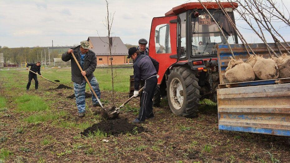 В нижнедевицком парке Победы посадили молодые липы