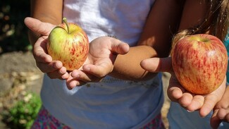 Как отучить детей от вредных пищевых привычек. 5 советов от воронежских экспертов