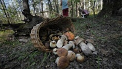 В Петропавловком районе украинская семья отравилась грибами