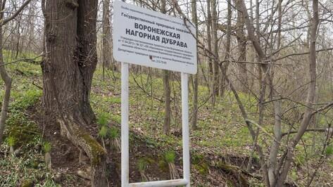 Ученые предложили признать воронежскую Нагорную дубраву достопримечательным местом