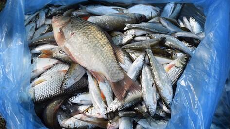 В Рамонском районе пройдет чемпионат России по рыболовному спорту