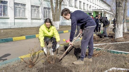 Девятиклассники лискинской школы №4 заложили «Сад памяти» на территории учреждения