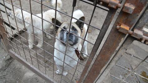 Проект собачьего приюта на 250 голов в Воронеже обойдется в 4 млн рублей