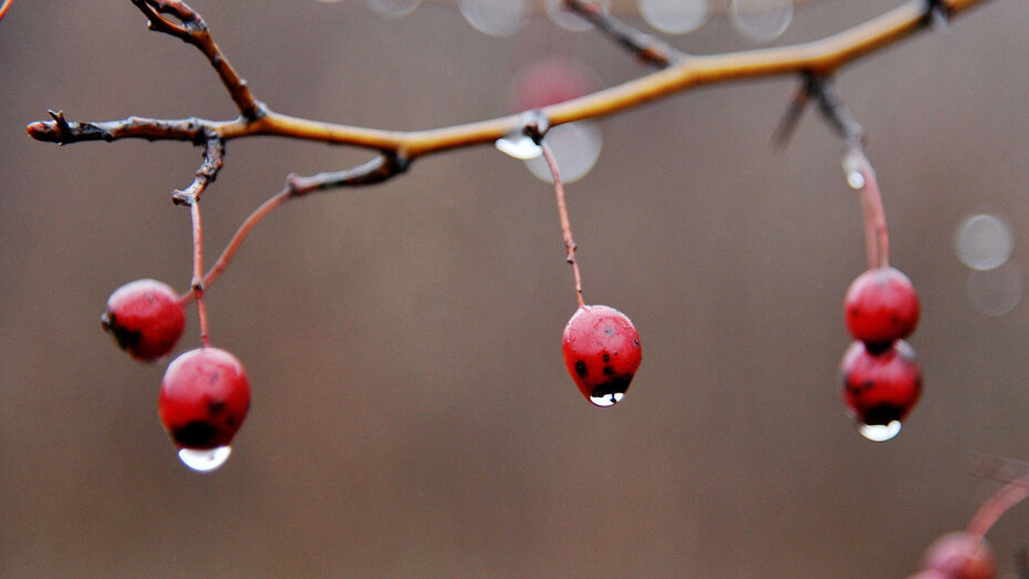 Дождливая осенняя погода установится в Воронеже на рабочей неделе
