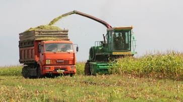 Воронежская область заняла 5 место в России по объему производства сельхозпродукции