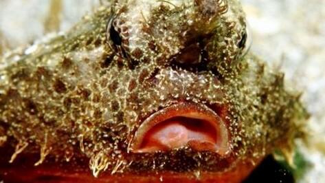 В Воронежском океанариуме поселилась рыба с губами как у Анджелины Джоли