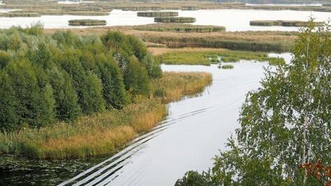 «Священной коровой» губернатор назвал зеленый пояс Воронежа