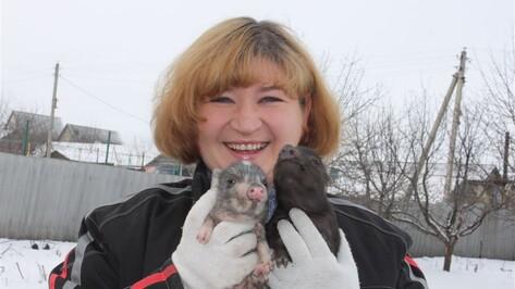 Жительница Хохольского района разводит экзотических свиней
