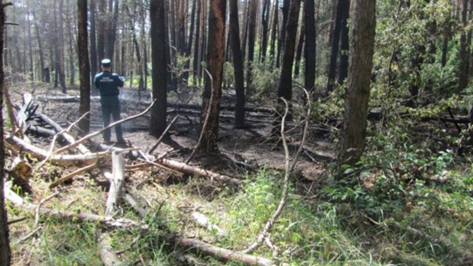 В Воронежской области в лесу площадь пожара вчера достигла почти 6 гектаров