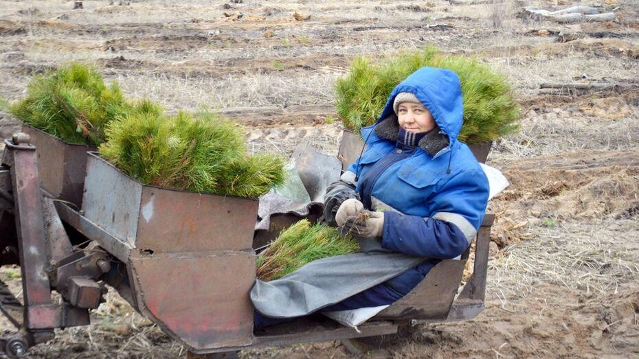 В Лискинском районе началась посадка леса