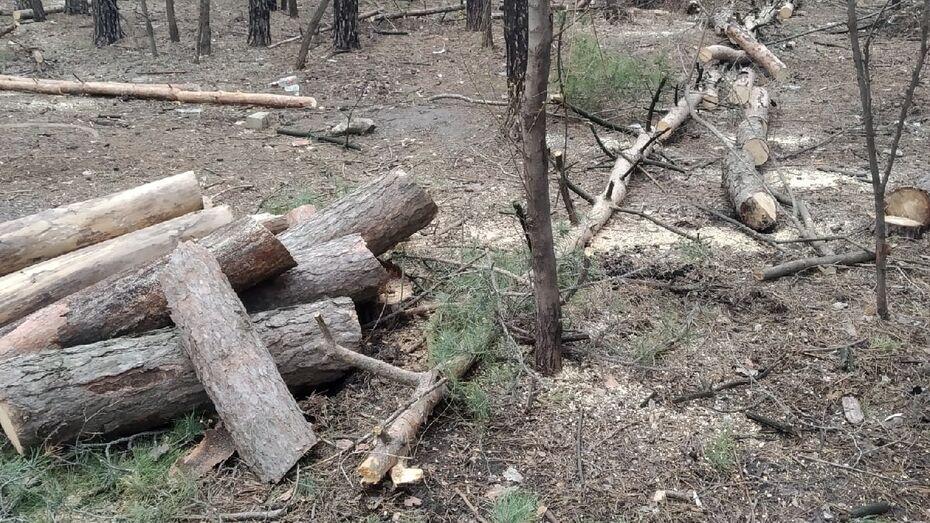 Воронежцы пожаловались на вырубку деревьев в парке