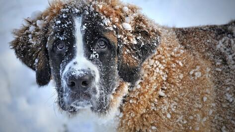 Воронежцы сообщили об отравителях собак в популярном парке