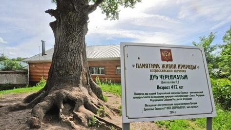 Воронежцы превратят деревья в «Памятники живой природы»