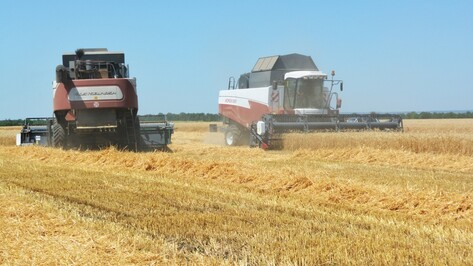 Калачеевские хлеборобы собрали 93 тыс т зерна