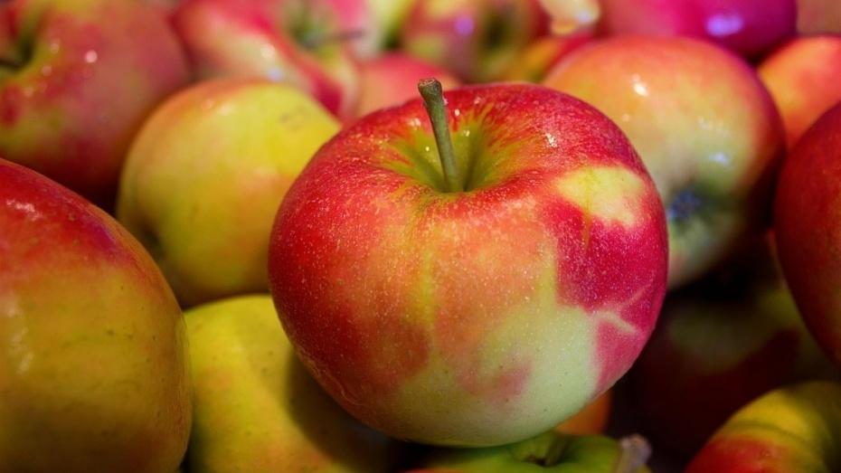Россельхознадзор помешал ввозу 20 т польских яблок в Воронеж