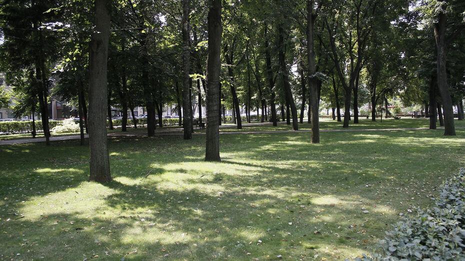В Воронеже к 2020 году появятся 3 новых сквера