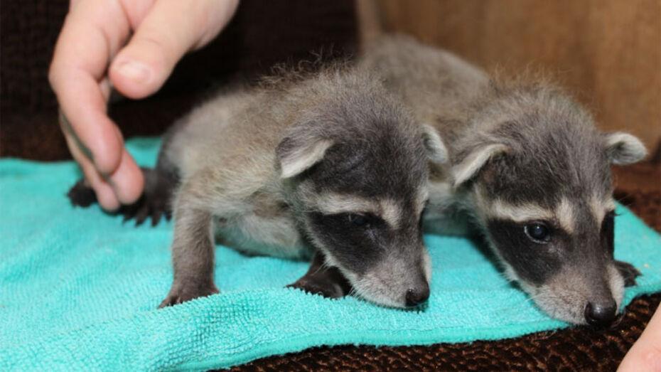 В Воронежском зоопарке с начала 2017 года родились 10 животных