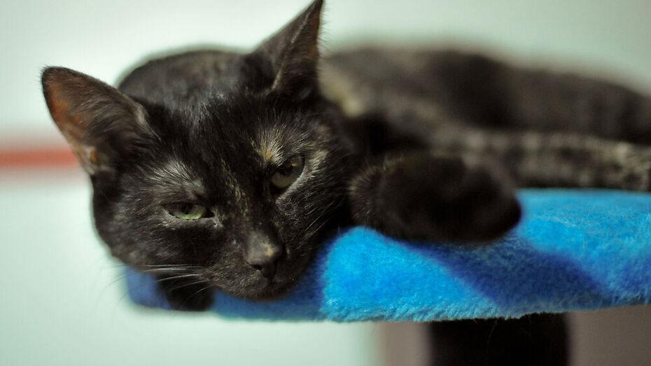 Жительница Воронежа потеряла сбережения в попытке купить котенка