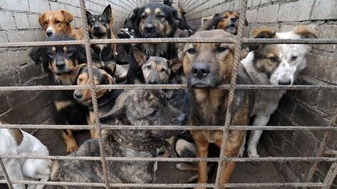 Зоозащитники научат воронежцев бороться с живодерами законными методами
