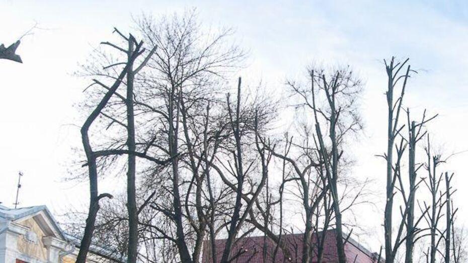 Коммунальщики перекроют на 12 часов улицу 5 Декабря в Воронеже