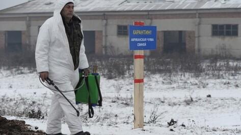 В Нижнедевицке завершилась дезинфекция подъездных путей к очагу АЧС