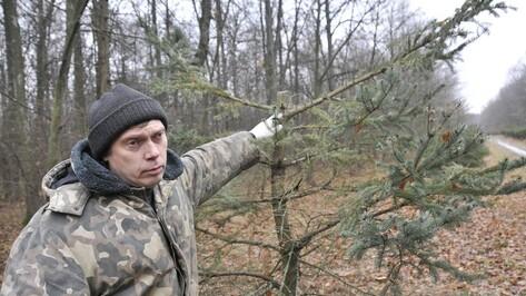 Воронежцев зовут охранять елки перед Новым годом