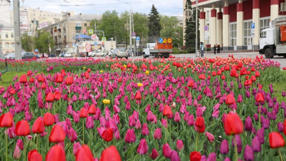 Более 600 тыс однолетних цветов посадят в Воронеже в 2021 году