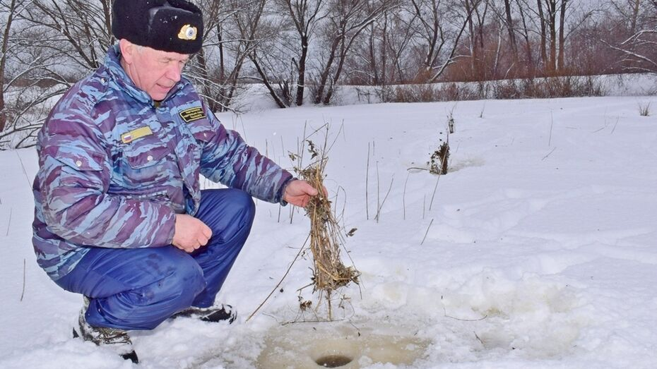 В Грибановком районе у рыб началось кислородное голодание