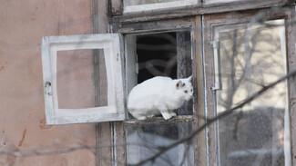 Инструкция РИА «Воронеж». Как не платить за отопление улицы