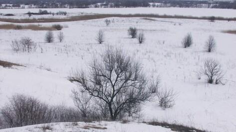 Выходные в Воронеже будут теплыми и пасмурными