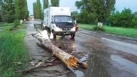 В Семилуках из-за урагана на автомобиль Kia Rio упало дерево