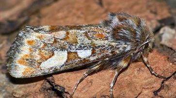 Леса Воронежской области атаковали бабочки-вредители