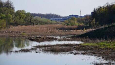 В Грибановском районе отходы сахарного завода загрязнили реку Ворона