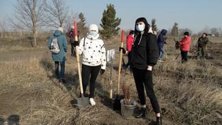 Воронежцам предложили поучаствовать в акции «Сад памяти» дистанционно