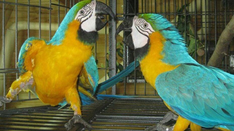 В Воронежском зоопарке появилось 10 новых птиц