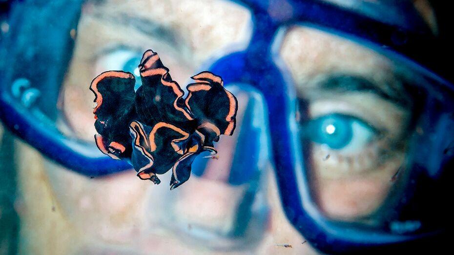 Подводный фотограф Алексей Зайцев: «Найдите удивительный мир в воронежской Усманке»