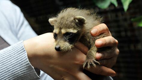 Потерявшему заработок воронежскому зоопарку найдут дополнительное финансирование