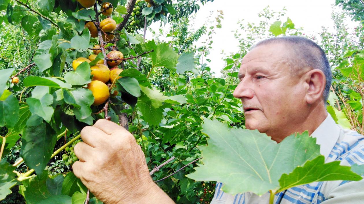 «Творческий процесс». Житель Воронежской области выводит новые сорта плодовых деревьев