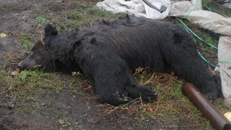 Ветеринары: «Напавший на пенсионера под Воронежем медведь не был бешеным»