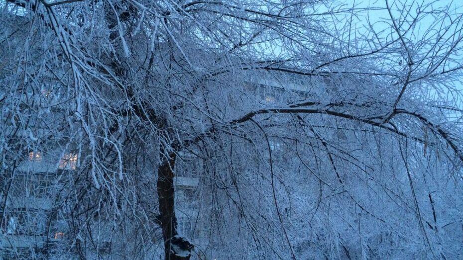 Налипший снег повалил в Воронеже сотни деревьев